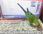 Any Tips For Cooking Parrots?