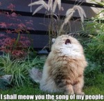 I Shall Meow You The Song Of My People