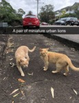 A Pair Of Miniature Urban Lions