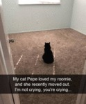 My Cat Pepe Loved My Roomie And She Recently...