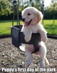 Puppy's First Day At The Park