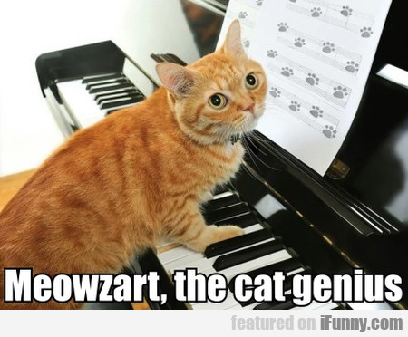 Meowzart, The Cat Genius