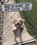 Beware Of Attack Dog