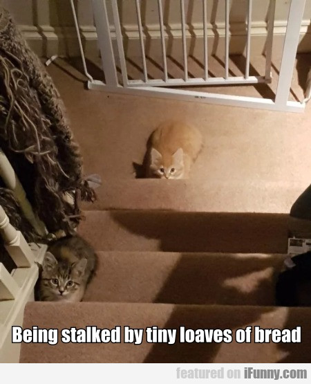 Being stalked by tiny loaves of bread