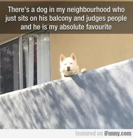 There's A Dog In My Neighourhood Who Just...