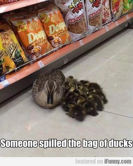Someone Spilled The Bag Of Ducks