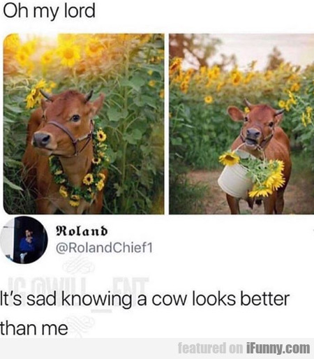 Oh My Lord - It's Sad Knowing A Cow Looks...