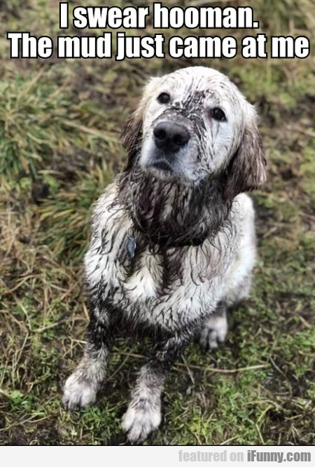 I Swear Hooman. The Mud Just Came At Me