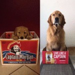 Captain Morgan - Live Like A Captain