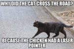 Why Did The Cat Cross The Road