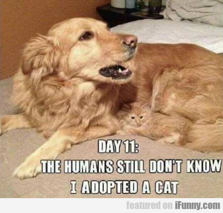 Day 11 - Humans Still Don't Know I Adopted A Cat