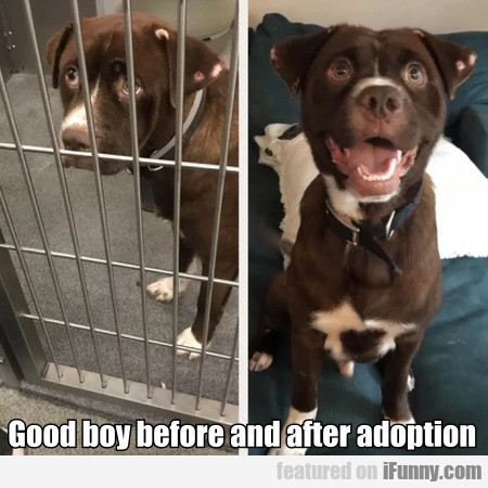 Good Boy Before And After Adoption