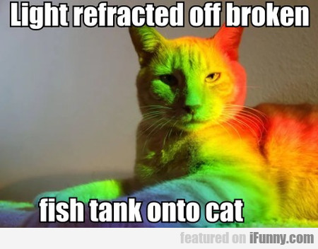 Light Refracted Off Broken Fish Tank Onto Cat