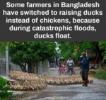 Some Farmers In Bangladesh Have Switched To...