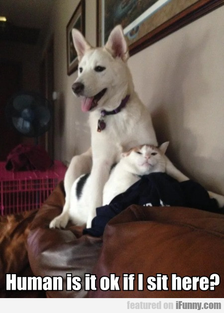 Human Is It Ok If I Sit Here?