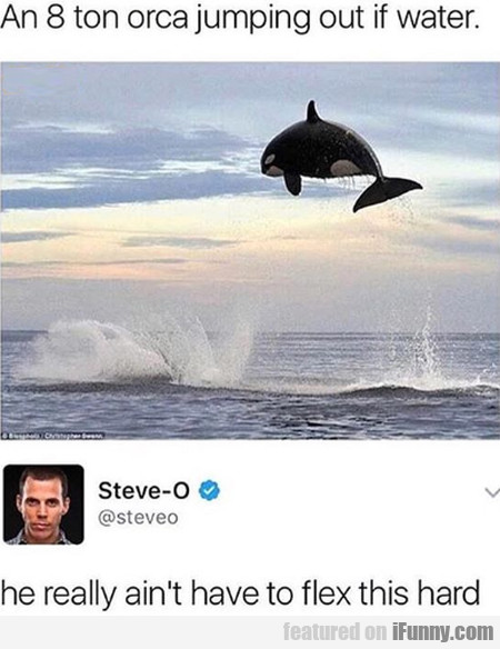 An 8 Ton Orca Jumping Out If Water...