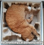 Received My Cat Delivery Today