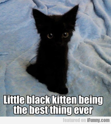 Little Black Kitten Being The Best Thing Ever