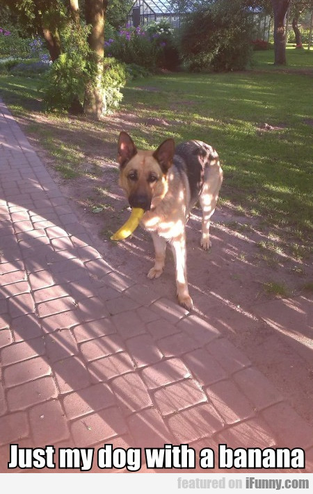 Just My Dog With A Banana
