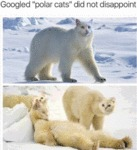 Googled Polar Cats Did Not Disappoint