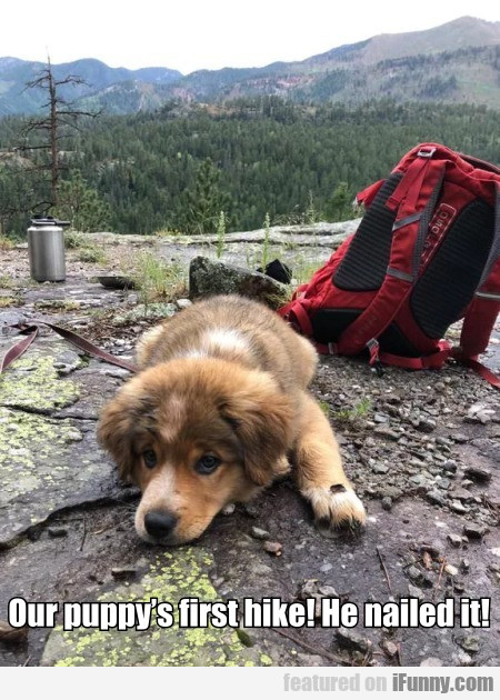 Our Puppy's First Hike! He Nailed It!