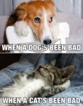 When A Dog's Been Bad - When A Cat's Been Bad..