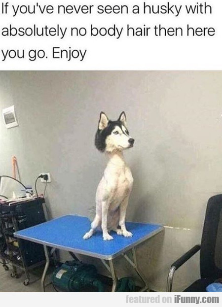 If You've Never See A Husky With Absolutely...