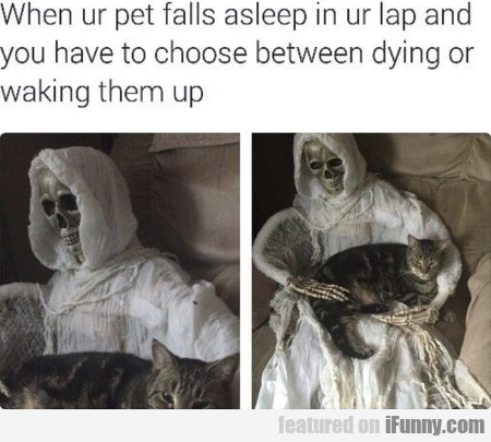 When Ur Pet Falls Asleep In Ur Lap And You Have...