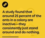 A Study Found That Around 25 Percent Of The Ants..