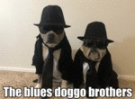 The Blues Doggo Brothers