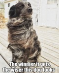The Windier It Gets, The Wiser This Dog Looks...