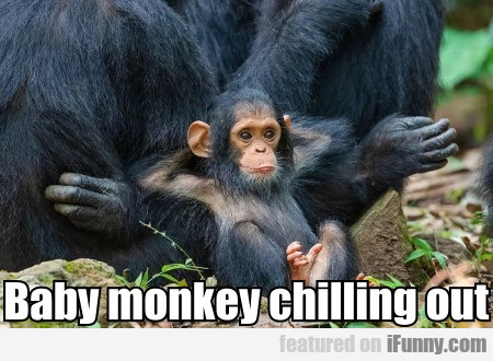 Baby monkey chilling out