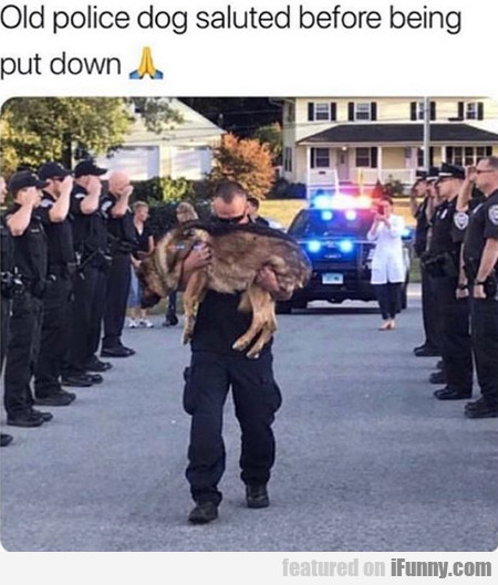 Old Police Dog Saluted Before Being Put Down...