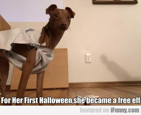 For Her First Halloween,she Became A Free Elf...