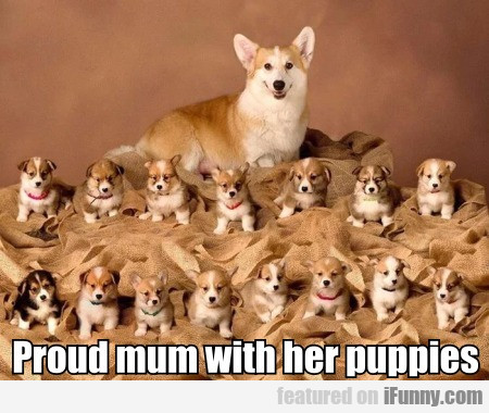 Proud Mum With Her Puppies...