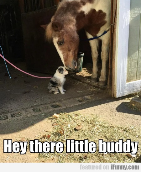 Hey There Little Buddy