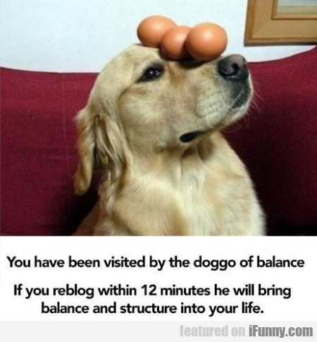You Have Been Visited By The Doggo Of Balance...