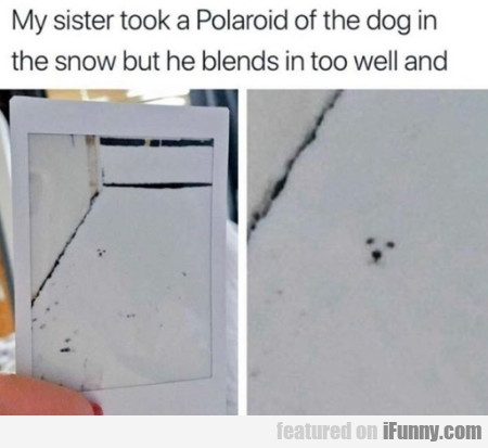 My Sister Took A Polaroid Of The Dog In The Snow..