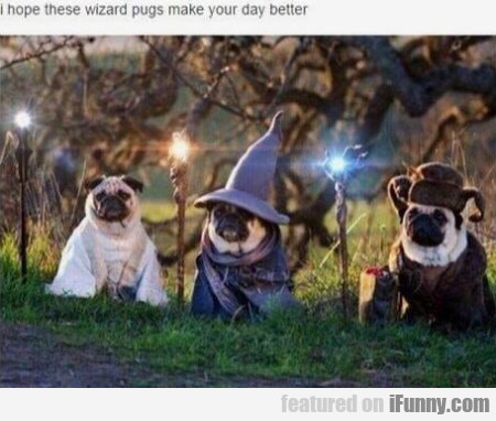 I Hope These Wizard Pugs Wake Your Day Better