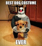 Best Dog Costume Ever...