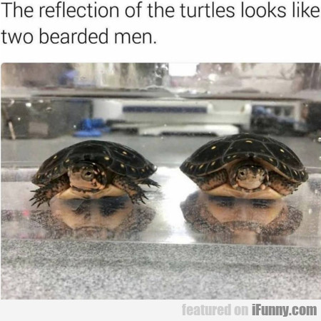 The Reflection Of The Turtles Looks Like Two...