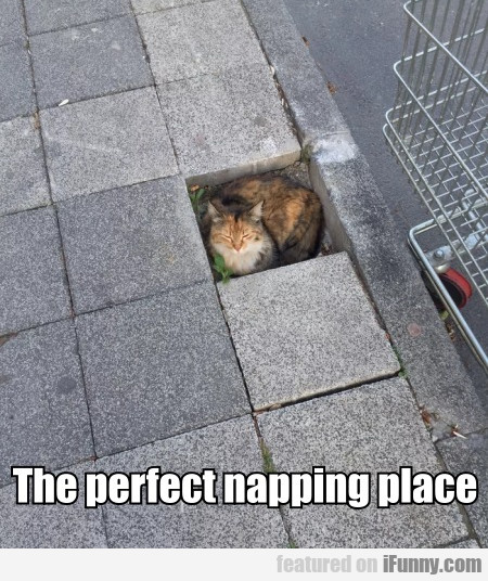 The perfect napping place