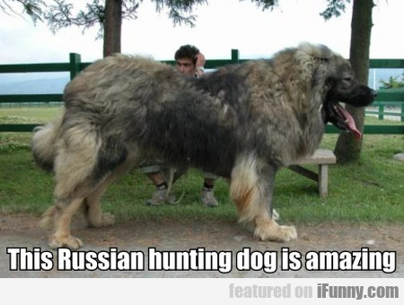 This Russian Hunting Dog Is Amazing