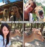 This Dear Is Not Trusting The Visitors