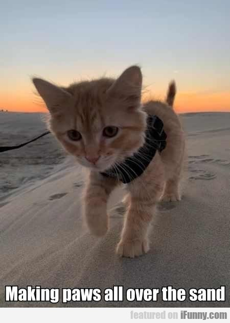 Making Paws All Over The Sand