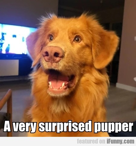 A Very Surprised Pupper