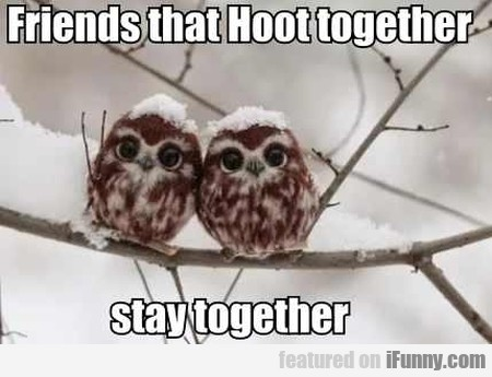 Friends That Hoot Together Stay Together