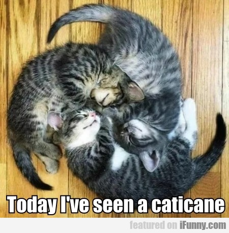 Today I've Seen A Caticane