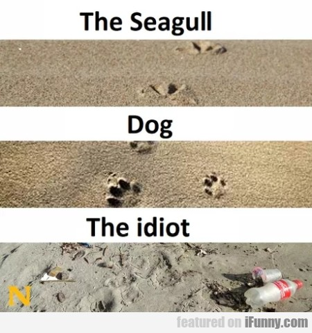 The Seagull - Dog - The Idiot