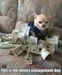 This Is The Money Management Dog